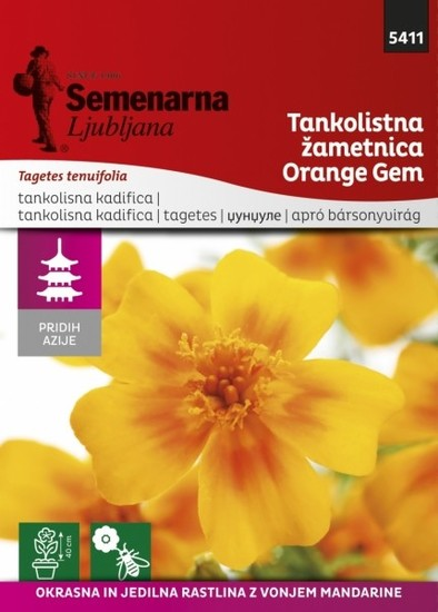 Tankolistna žametnica »Orange Gem«